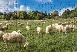 Puzzle-Postkarte Schwäbische Alb
